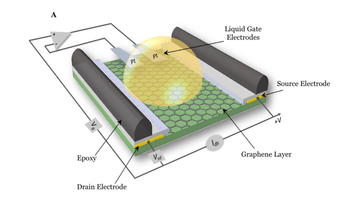Image of graphene biosensor, electrodes and circuitry from Nature Biomedical Engineering https://www.nature.com/articles/s41551-019-0371-x
